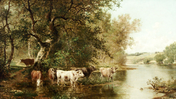 Cows Watering By A Stream