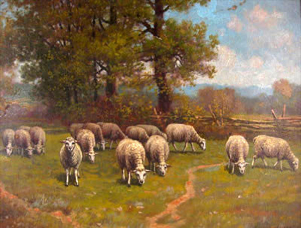 Sheep Grazing In A Pasture In Summer