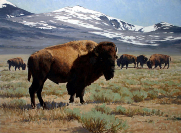 Bison Of The High Country
