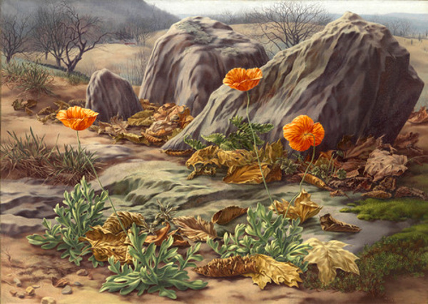 Landscape And Poppies