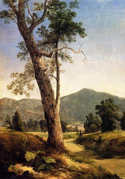 Landscape Beyond The Tree
