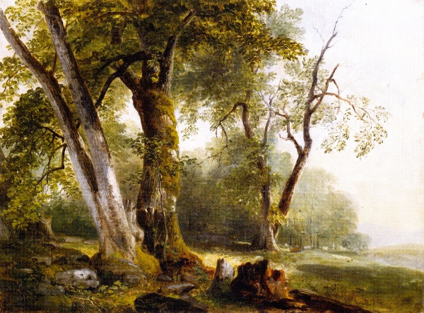 Landscape With Beach Trees