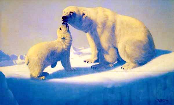 Tender Arctic