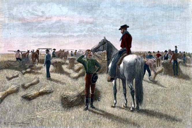 Wheat-Harvesting In Dakota