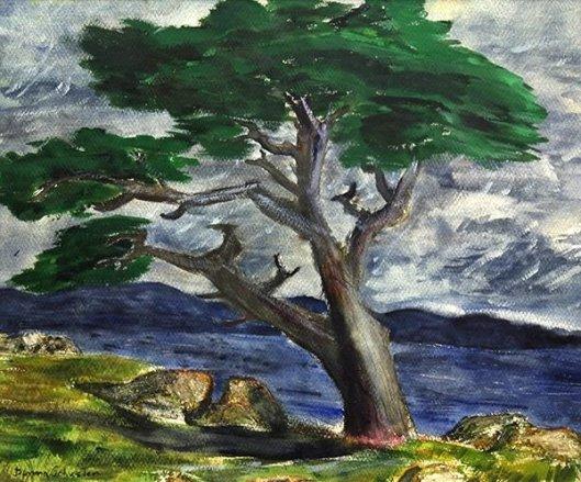 California Cypress