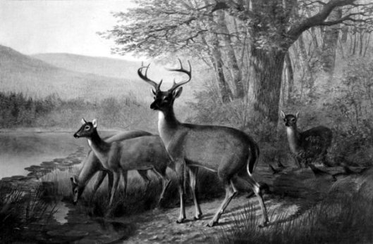 Landscape And Deer