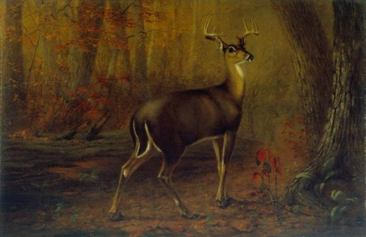 The Virginia White-Tailed Deer