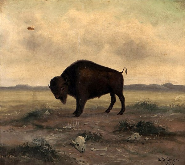 Buffalo In A Landscape