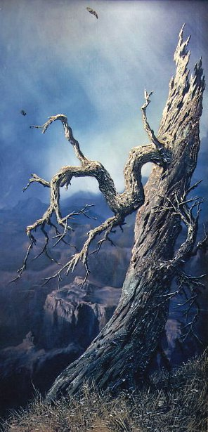 Tree At Canyon