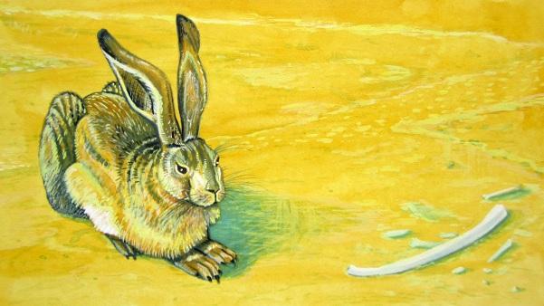 Durer's Desert Hare