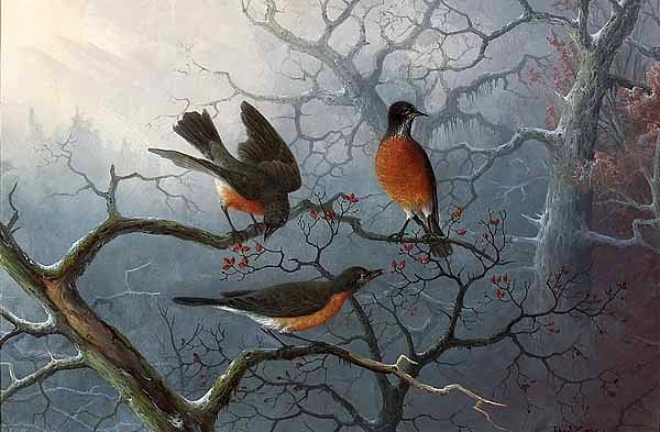 Three Robins Amid Snowy Branches