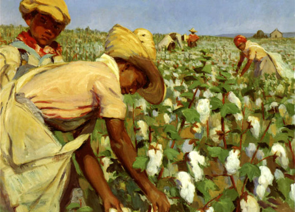 Cotton Picking Time