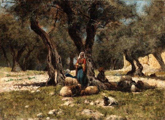 In The Olive Grove, Morocco