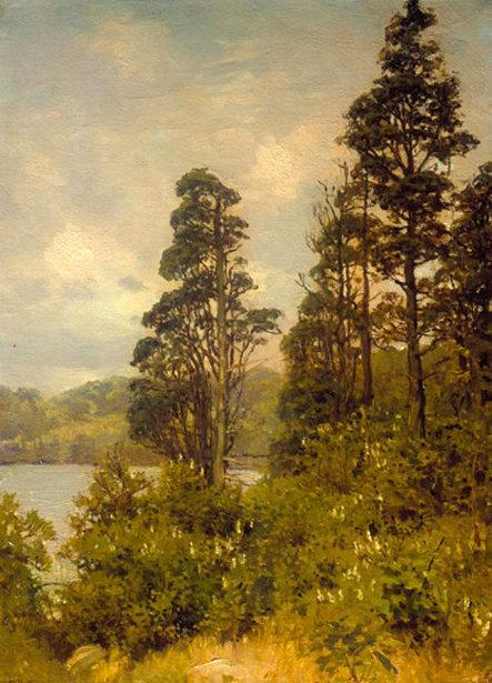 Cedar Pond View