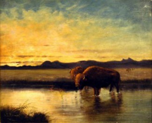 Landscape With Buffalo