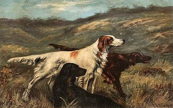 Three Setters In A Field